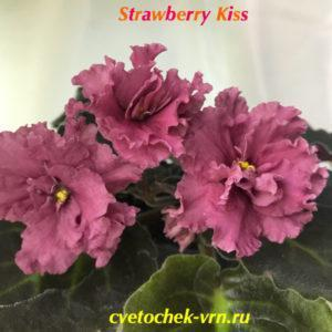 Strawberry Kiss (Sorano LLG)