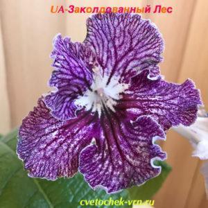 UA-Заколдованный Лес (Ю.Склярова)