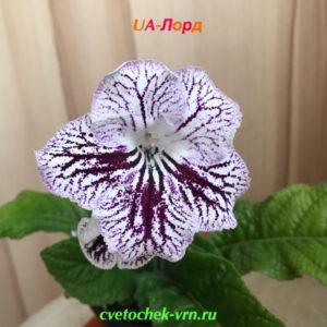 UA-Лорд (Ю.Склярова)