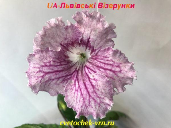 UA-Львiвськi Вiзерунки