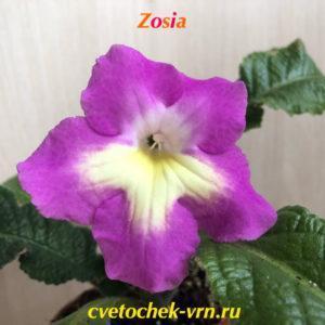 Zosia