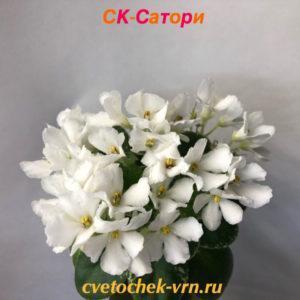 СК-Сатори (А.Кузнецов)