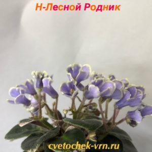 Н-Лесной Родник (Н.Бердникова)