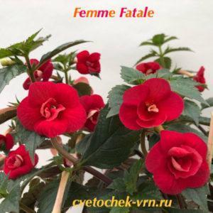 Femme Fatale (S.Saliba)