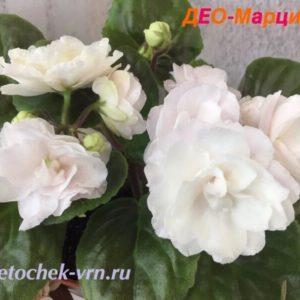 ДЕО-Марципан (О.Аксенкина)