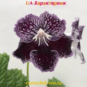 UA-Характерник