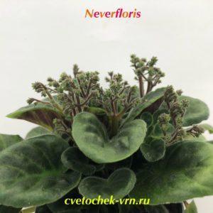 Optimara NeverFloris (R.Holtkamp)