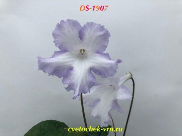 DS-1907