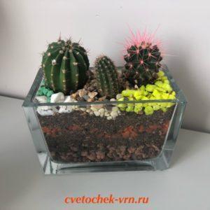 Флорариум «Яркие колючки»