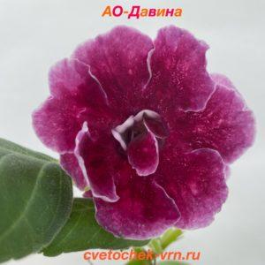 Куртизанка (Л. Ткаченко)