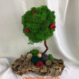 Деревья из стабилизированного мха