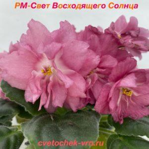 НК-Лилон Лила (Н.Козак)