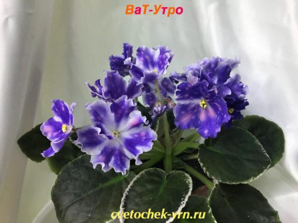 ВаТ-Утро (Т.Валькова)