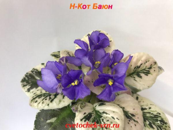 Н-Кот Баюн (Н. Бердникова)