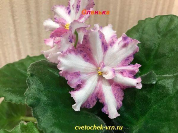 Оленька (Артёмовна Андрусенко)
