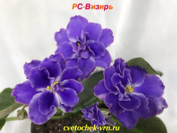РС-Визирь