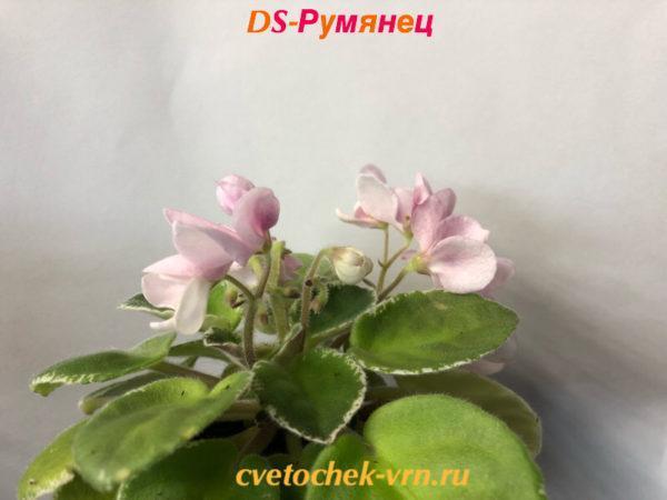 DS-Румянец (Dimetris)