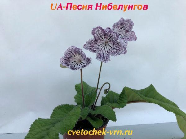 UA-Песня Нибелунгов