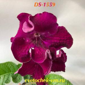 DS-1559