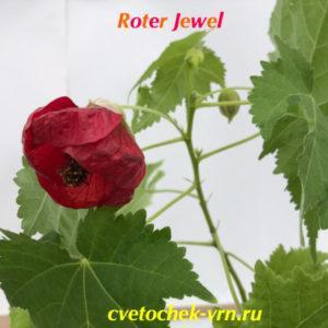 Roter Jewel