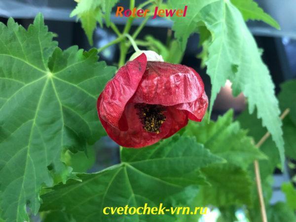 Roter Jewel