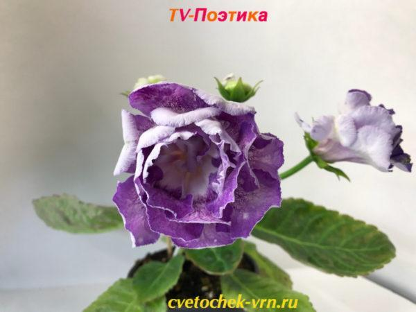 TV-Поэтика (Т.Высота)