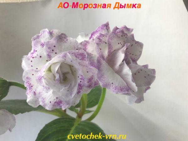 АО-Морозная Дымка (О.Артемова)