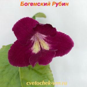 Богемский Рубин (Парамоновы)