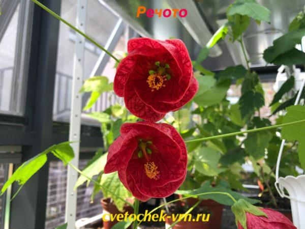 Речото (Т.Цепкова)