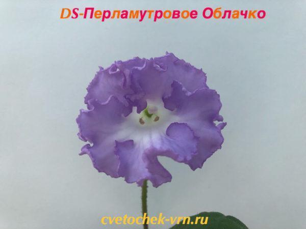 DS-Кавказская Пленница