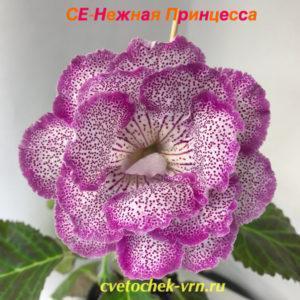 СЕ-Нежная Принцесса (Е.Соловьева)