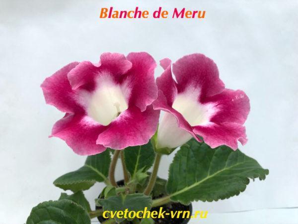 Blanche de Meru
