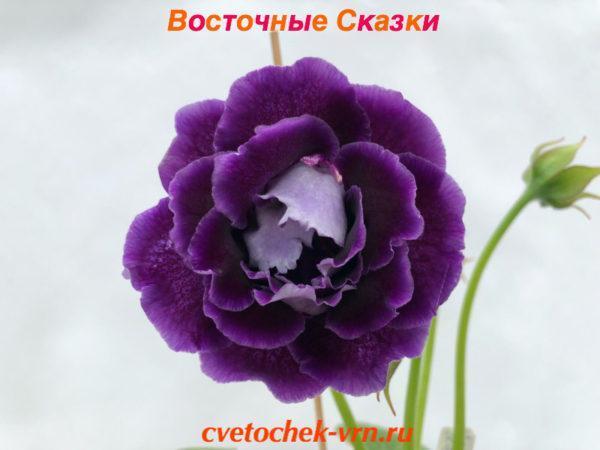 ЛТ-Восточные Сказки (Л.Ткаченко)