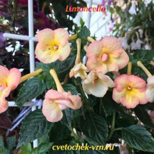 Limoncello (S.Saliba)