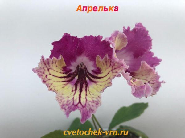Апрелька (Н.Павлюк)