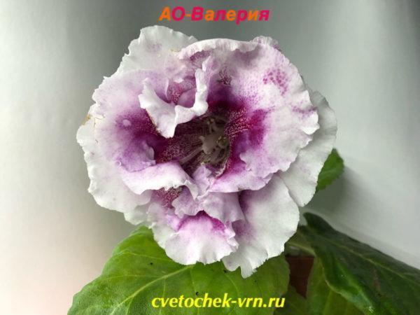 АО-Валерия (О.Артемова)