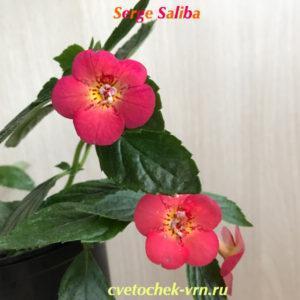 Serge Saliba (S.Saliba)