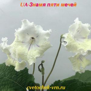 UA-Знамя Пяти Мечей
