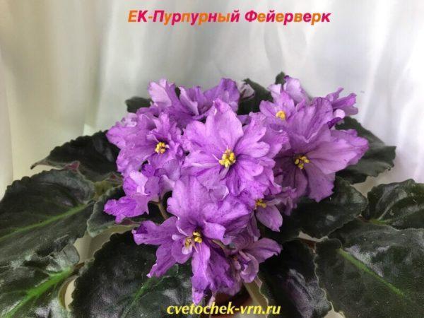 ЕК-Пурпурный Фейерверк