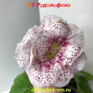 НТ-Рудольфина