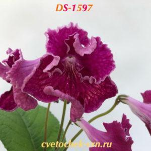 DS-1597