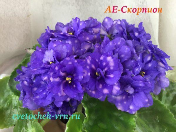 AE-Скорпион