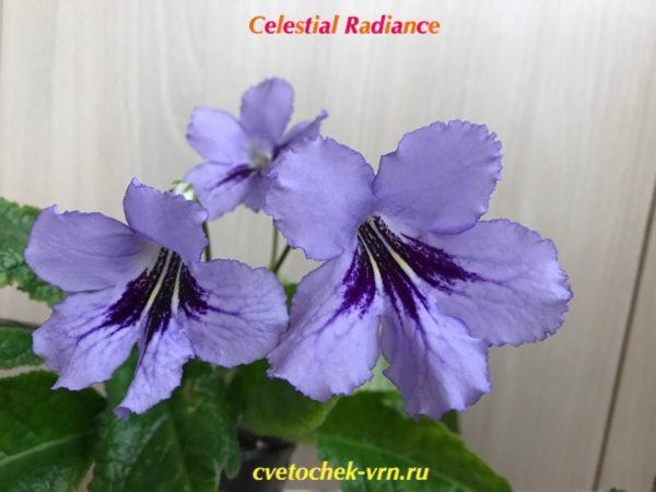 Celestial Radiance (D.Thompson)