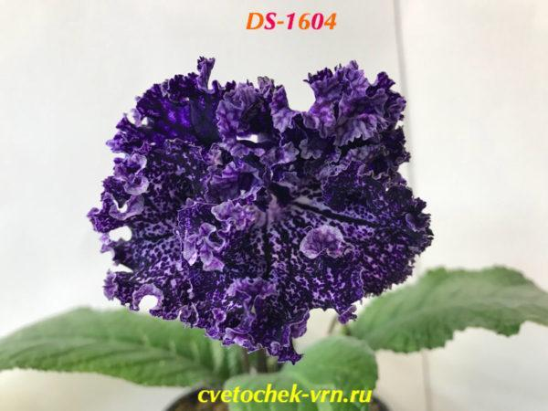 DS-1604
