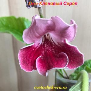 Dem-Кленовый Сироп
