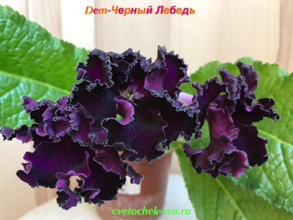 Dem-Чёрный Лебедь (Д.Демченко)