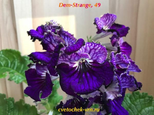 Dem-Strange, 49