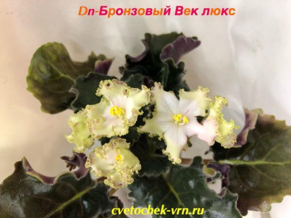 Dn-Бронзовый Век люкс (Д.Денисенко)