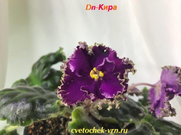 Dn-Кира (Д.Денисенко)