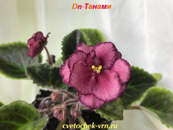 Dn-Танами (Д. Денисенко)